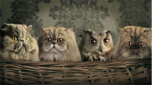 Какую птицу называют крылатой кошкой?